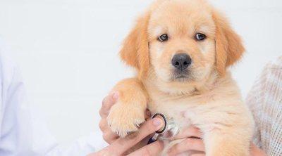 La alergia en perros: síntomas y soluciones