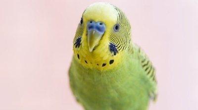 Causas de la muerte súbita en aves domésticas
