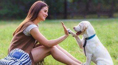 Adiestramiento positivo en perros: cómo llevarlo a cabo
