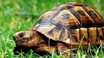 Descubre 15 curiosidades sobre las tortugas
