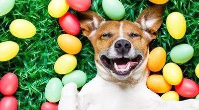 ¡Sorpresa! 'What the fluff', el challenge de mascotas con el que no podrás contener la risa