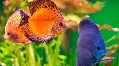Cómo hacer un acuario casero
