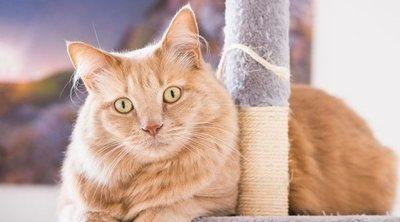 10 juguetes caseros para gatos