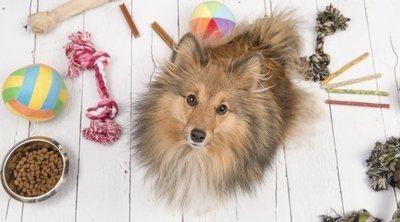 10 juguetes caseros para perros