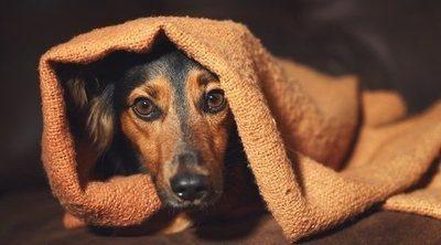 Cómo calmar a tu perro durante los fuegos artificiales