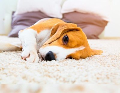 Epilepsia en perros: por qué sucede y cómo tratarla