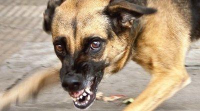 La rabia en perros: cómo detectarla y ponerle solución