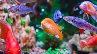 Criar peces en el acuario: todo lo que necesitas saber