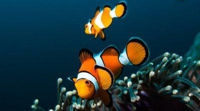 Peces que limpian el acuario