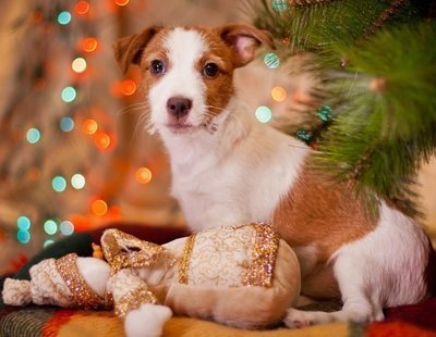 Regalar mascotas en Navidad: consejos a tener en cuenta