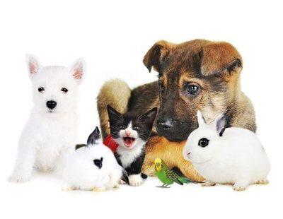 Cómo evitar que tu mascota te contagie enfermedades
