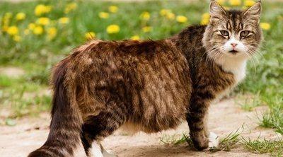 Cómo cuidar a una gata embarazada: trucos y consejos