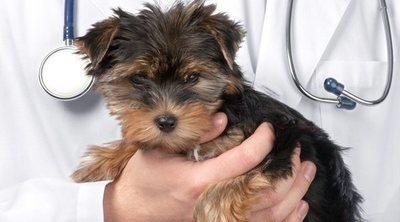 Cuidados postoperatorios tras la castración de tu mascota