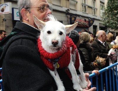 El día de San Antón: la fiesta de los animales