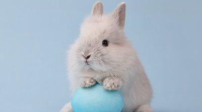 Conejo con pulgas: cómo solucionarlo