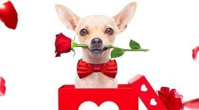 Regalos de San Valentín para tu mascota