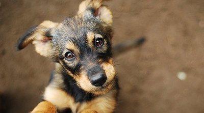 Acné en perros: síntomas y tratamiento