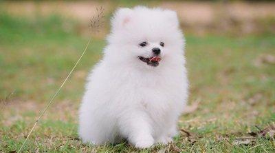 Consejos para mantener limpio el pelo blanco de los perros