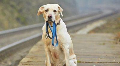 Aplicaciones para encontrar perros perdidos