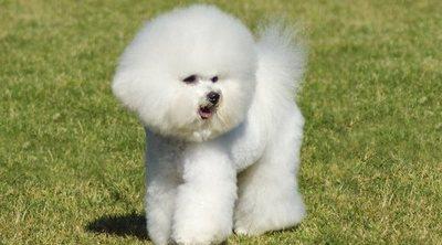 Las razas de perro más limpias