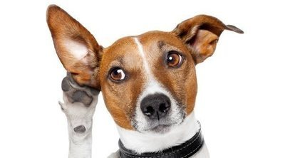 Problemas de audición en perros