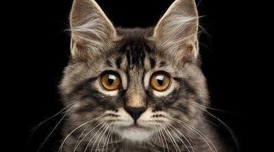 Fuentes de agua para gatos, la mejor manera de cuidarlos