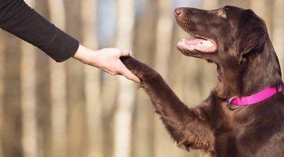 Técnicas de adiestramiento para perros