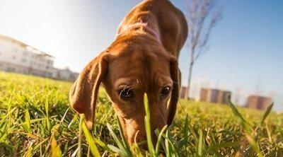 Juegos de olfato para perros: tipos y beneficios