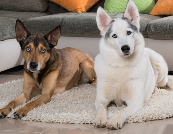 alimentación en prostatitis y perro
