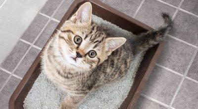 Infección de orina en gatos: Síntomas y tratamientos