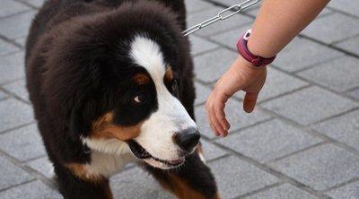 Cómo acercarse y cómo tratar a un perro desconocido