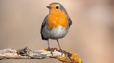El lenguaje corporal de las aves: conoce lo que dice tu mascota