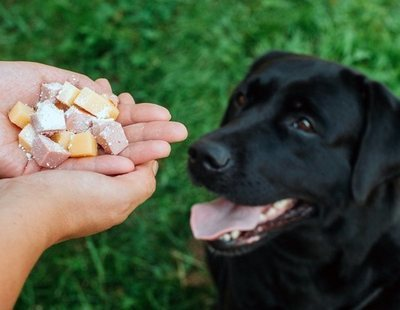 Medicamentos terminantemente prohibidos para perros