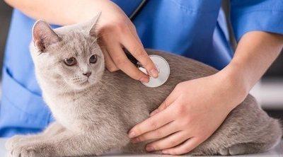 La primera visita al veterinario de tu mascota