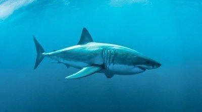 ¿Se puede tener un tiburón como mascota?