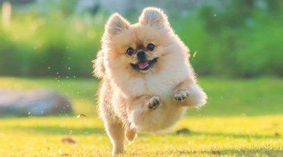 Cómo cuidar las articulaciones y los huesos de tu perro