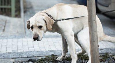 Causas y síntomas del estreñimiento en perros