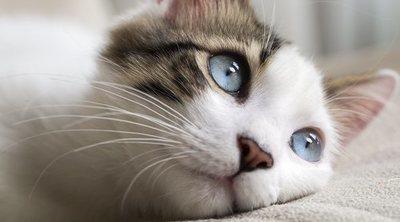 La gastroenteritis en gatos: todo lo que necesitas saber