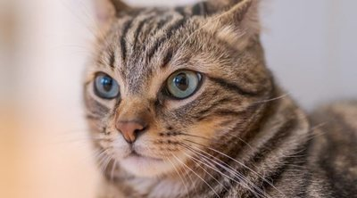 Hongos en gatos: cómo acabar con este problema