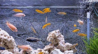 Iluminación de un acuario: todo lo que necesitas saber