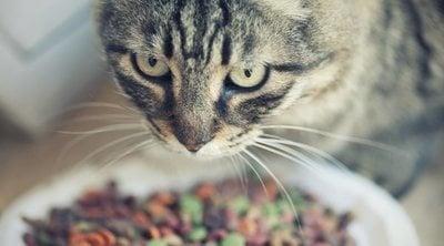 Alimentación para gatos con sobrepeso
