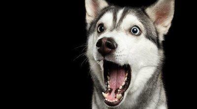 Tipos de bozales para perros