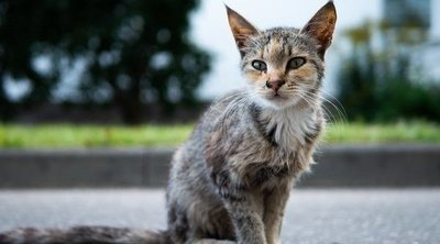 Anorexia en gatos: todo lo que necesitas saber