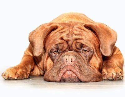 Cuidados para perros con arrugas