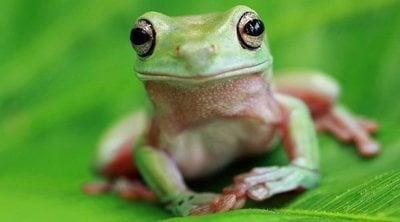 Cuidados básicos para tener una rana como mascota