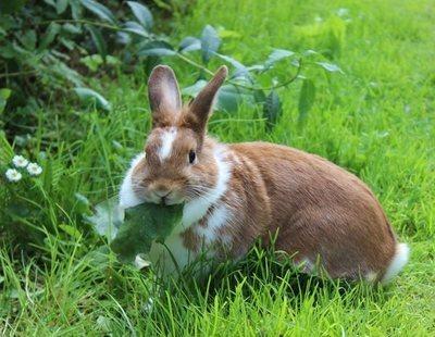Primeros auxilios en conejos: un simple gesto puede salvarle la vida