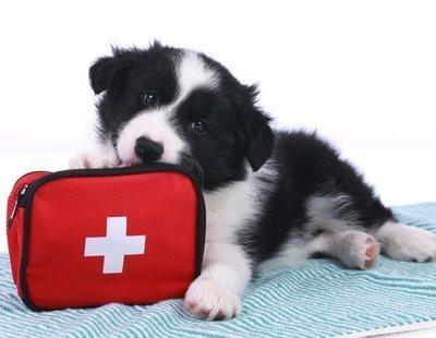 Botiquín para perros: productos indispensables