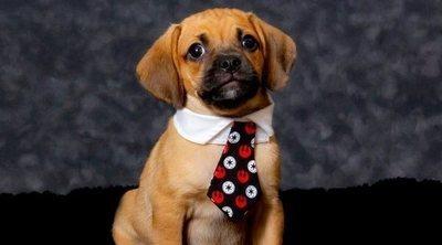 Razas de perro: Puggle