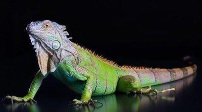 Hipotermia en reptiles: ¿qué debes hacer?