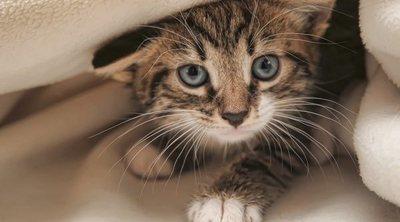 Cómo elegir a un gato: trucos para escoger al adecuado